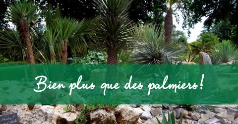 Page d'accueil La Palmeraie