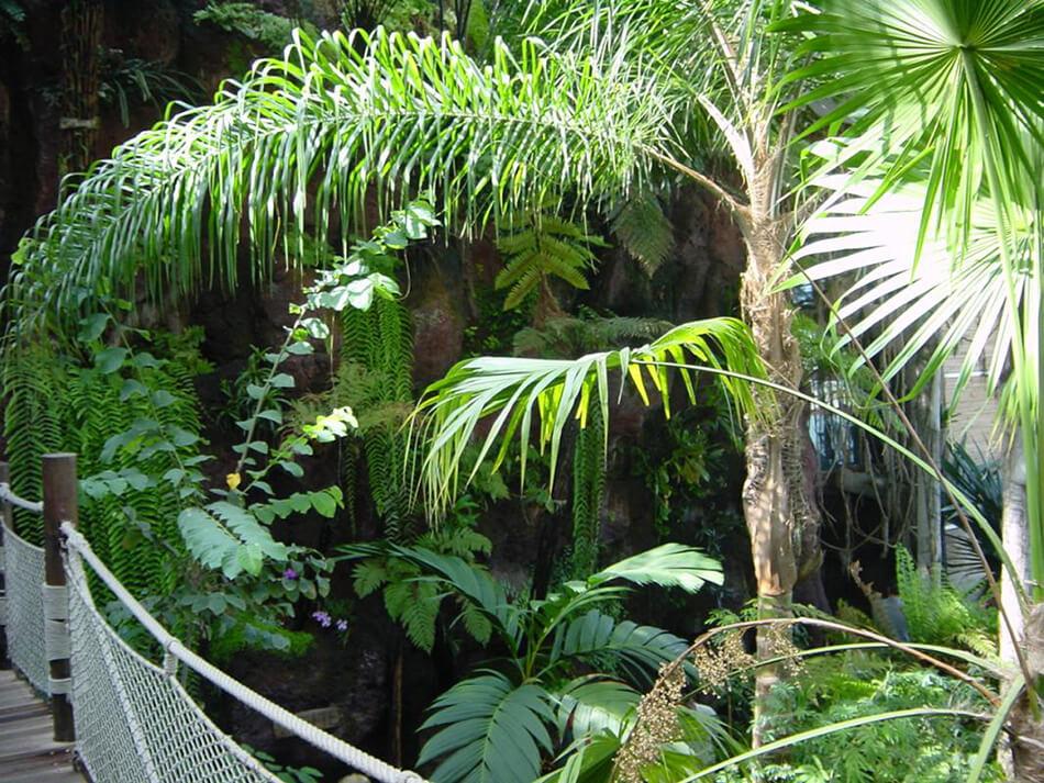 Aménagement végétaux aquarium de la rochelle - pépinière La Palmeraie