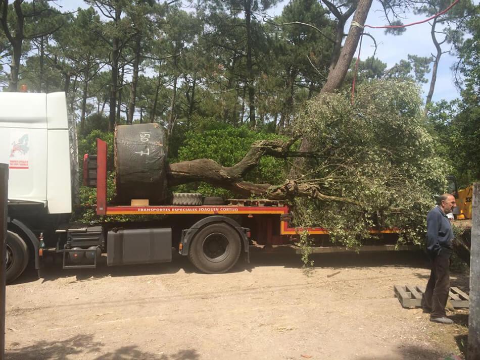Aménagement arbres paysagés Cap Ferret - pépinière La Palmeraie