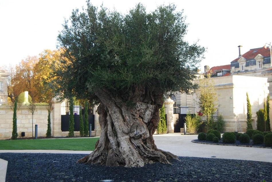 la-grande-maison-joel-robuchon-bernard-magrez-2