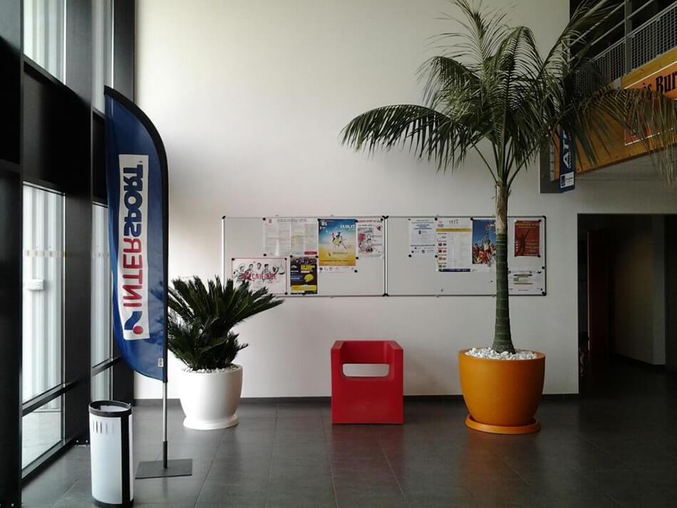 Aménagement palmier ligue de guyenne fft talence - La Palmeraie