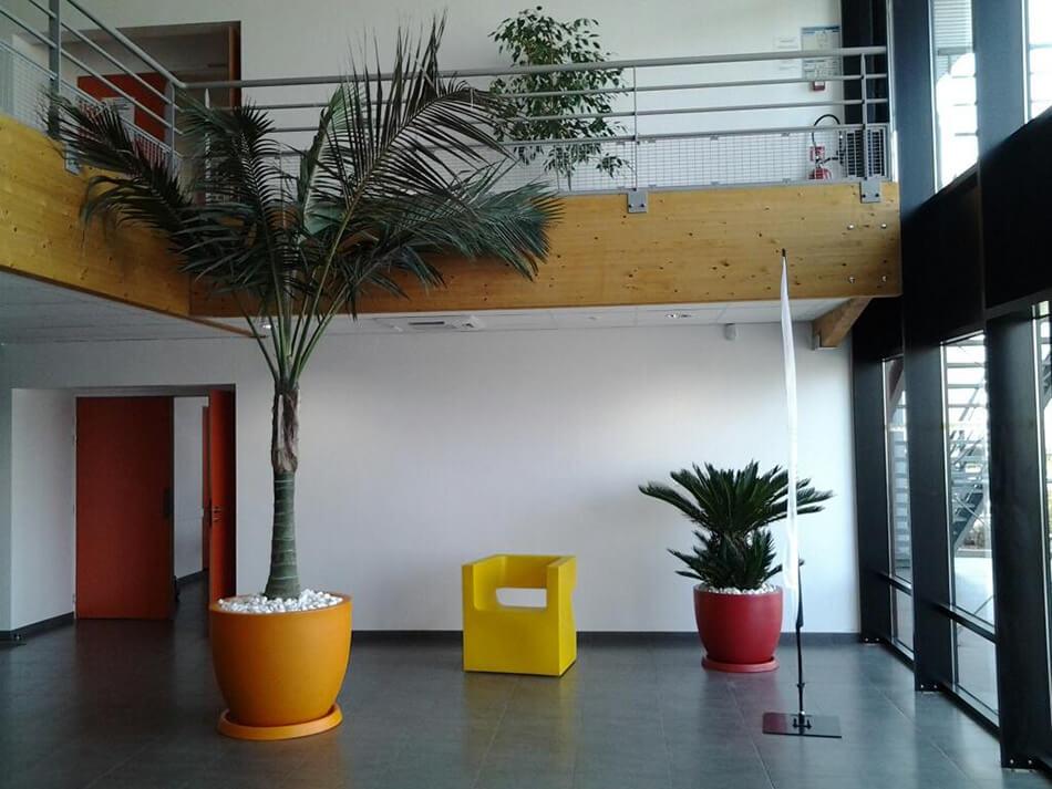 Aménagement palmier ligue de guyenne fft talence – La Palmeraie