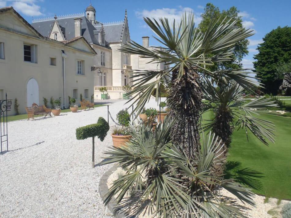 olivier-bonsai-3