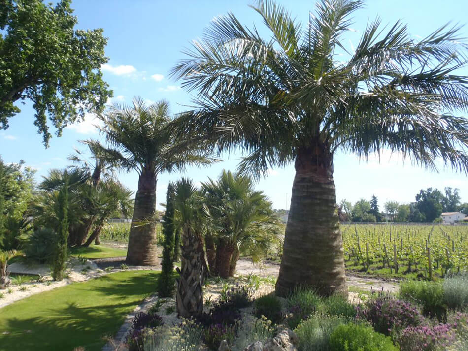Aménagement plantes arbres et arbustes - pépinière La Palmeraie