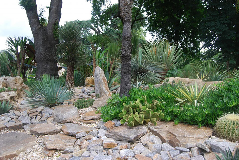olivier-bonsai-6