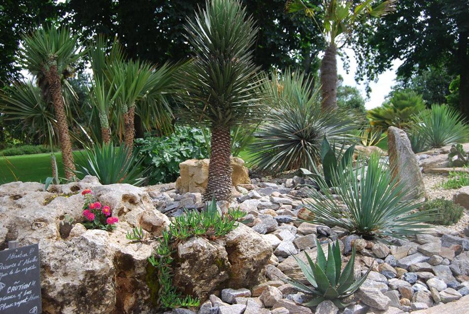 olivier-bonsai-9