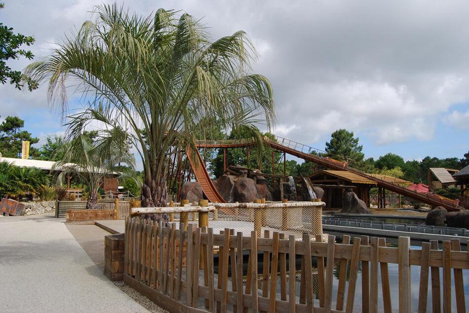 Aménagement palmier parc la coccinelle gujan mestras – La Palmeraie