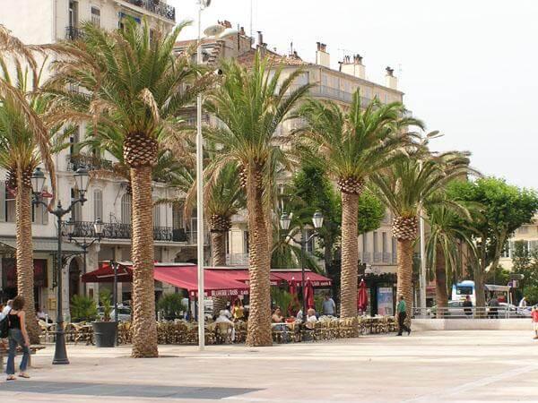 Aménagement palmiers mairie de Toulon - pépinière La Palmeraie