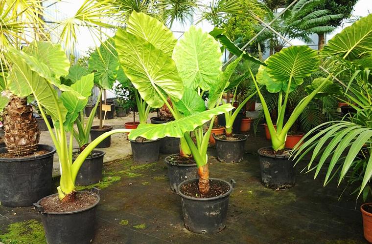 Vente plantes d'intérieur pépinière La Palmeraie de Mios
