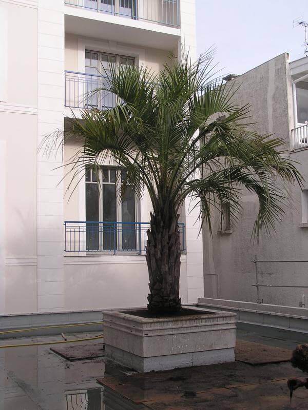Aménagement palmiers Ville d'été Arcachon - La Palmeraie