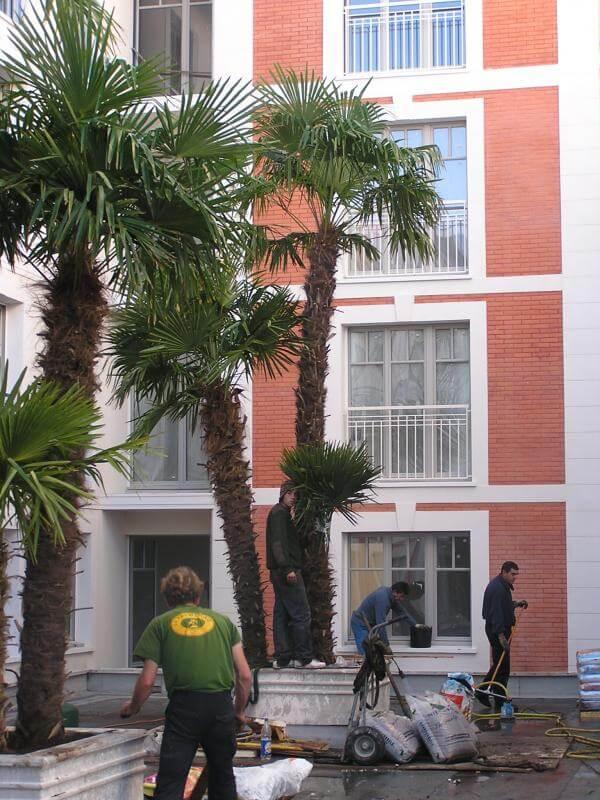 Aménagement palmiers Ville d'été Arcachon – La Palmeraie